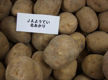 Potato_kita