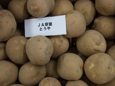 Potato_toya