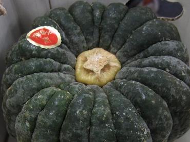 Pumpkinkogiku2