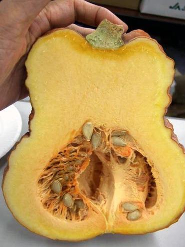 Pumpkinsisi2