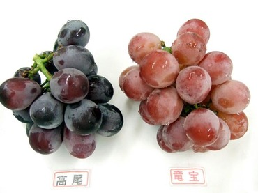 Tokyo_grapes