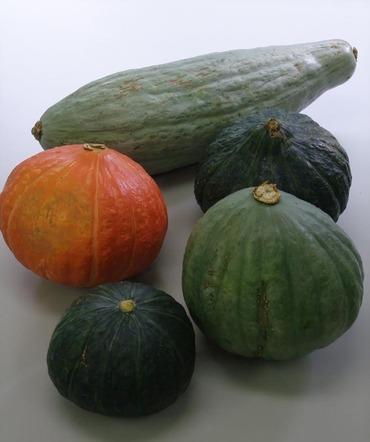Ogawa_pumpkin