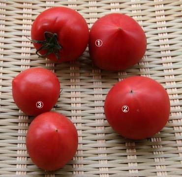 Tomatos02