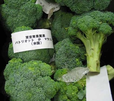 Broccoli01_2