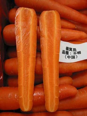 Carrot02_2