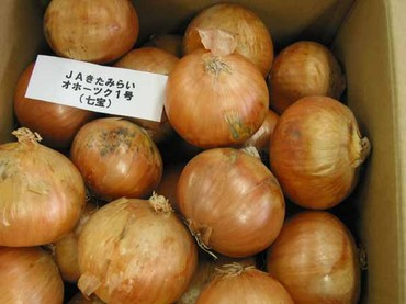 Onion01