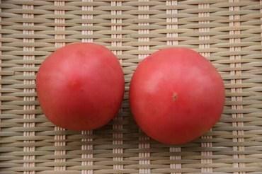 Tomato06