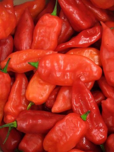 Pepper_peru02