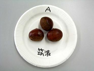A_tukuba