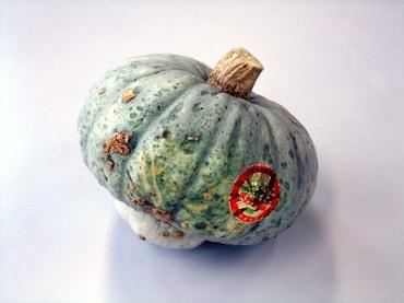 Zao_pumpkin02