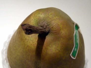 Pear_ripe02_2