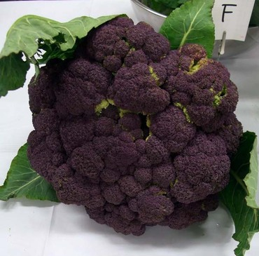 Purple_broccoly02