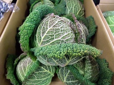 07savoy_cabbage01