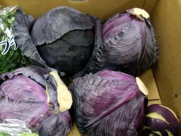 12purple_cabbage01