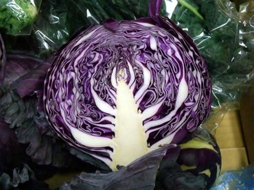 12purple_cabbage02
