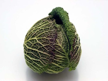 Savoy_cabbage01
