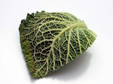 Savoy_cabbage07
