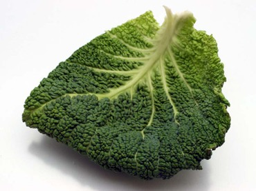 Savoy_cabbage08
