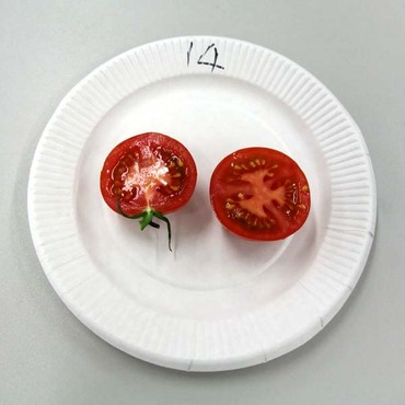 14cocktail_tomato3