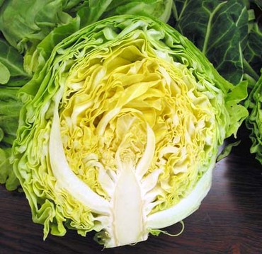 Cabbage_cut2