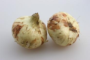 New_onion01