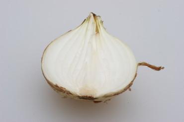 New_onion04