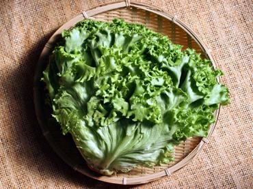 Lettuce01