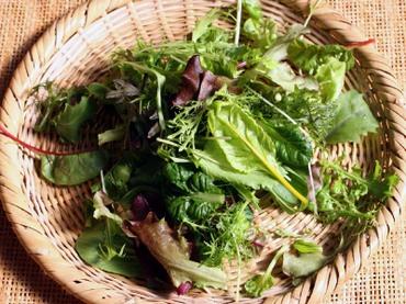 Salada_mix01