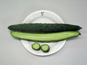 05suyo04