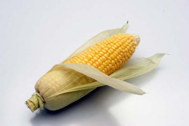 Sweetcorn_before