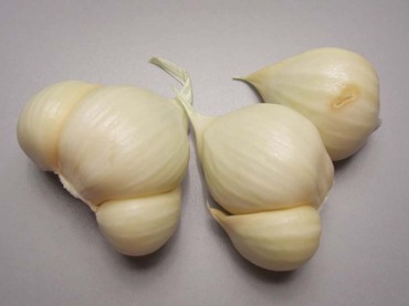 Garlic_big07