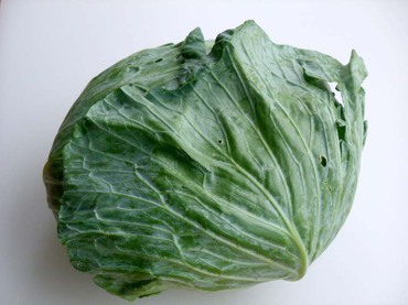 Cabbage01