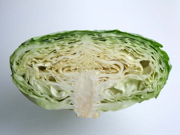 Cabbage03