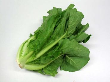 06cos_lettuce02_2