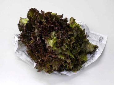 Frill_lettuce
