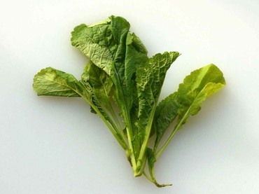 Kumaru_leaf02