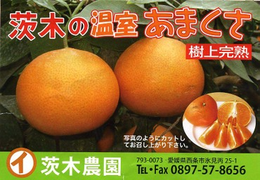 Label_amakusa