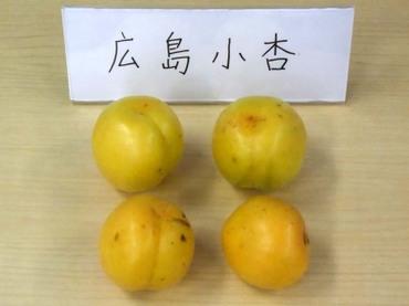 03hirosima01
