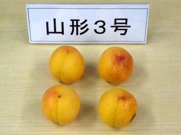 04yamagata01