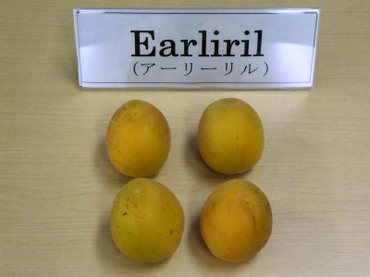 07earliril01