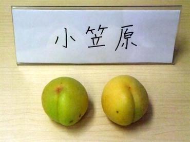 12ogasawara01