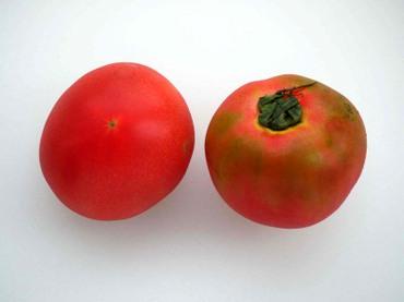 Yokohama_tomato02