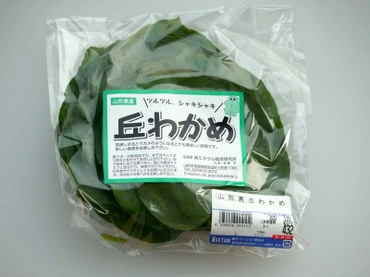Okawakame01