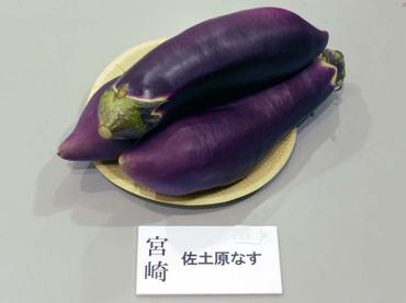 Miyazaki_sadohara01