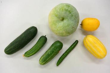 野菜の学校(5) みんな、うり科: クサマヒサコの野菜ノート